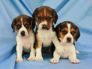puppys and dogs for sale